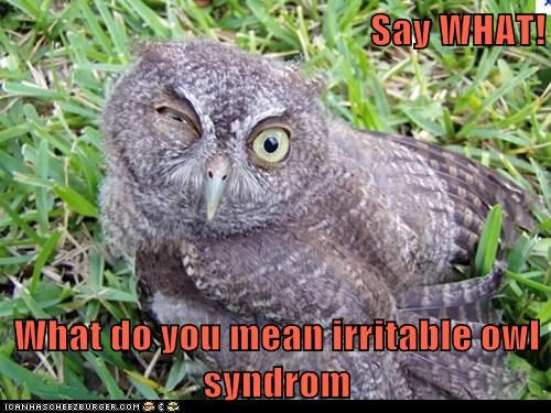 Say WHAT! What do you mean irritable owl syndrom