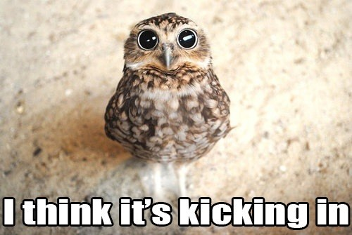 high,Owl