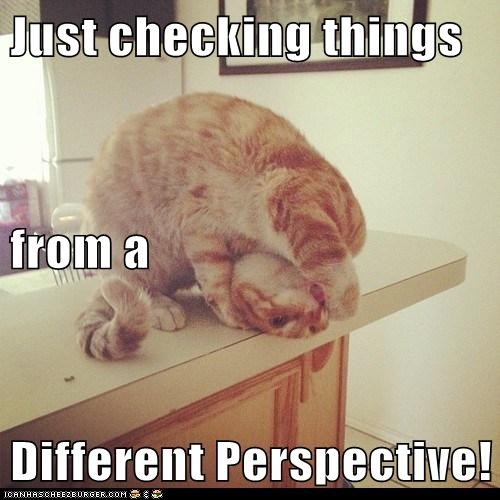 Just Checking Things From A Different Perspective Lolcats Lol Cat Memes Funny Cats Funny Cat Pictures With Words On Them Funny Pictures Lol Cat Memes Lol Cats
