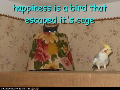 bird happiness - 7168431104