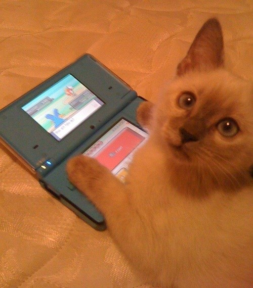 Pokémon video game save - 7168553472