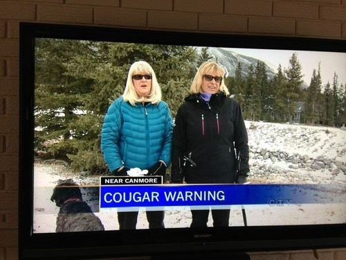 cougar news not what it looks like fail nation g rated - 7168676352