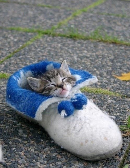 kitten,sleeping bag