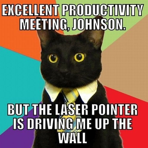 meetings,Business Cat,laser pointer