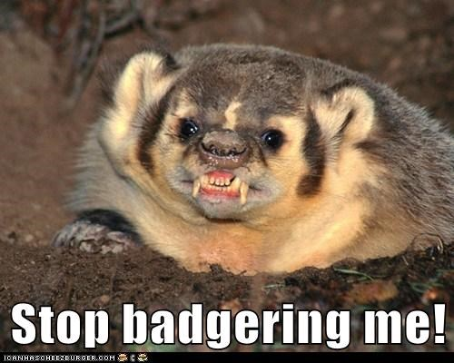 badger,derp