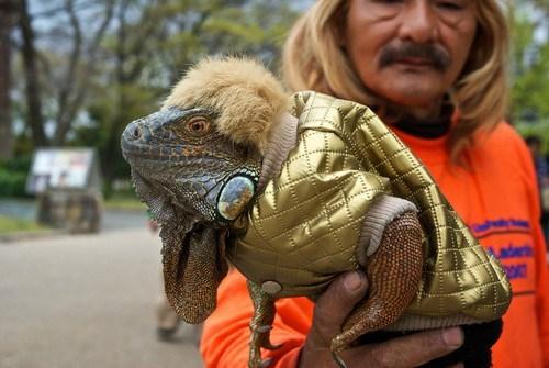 wtf wigs costume lizard - 7168841984