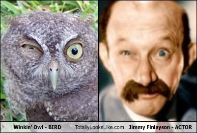 winking,totally looks like,Owl,jimmy finlayson