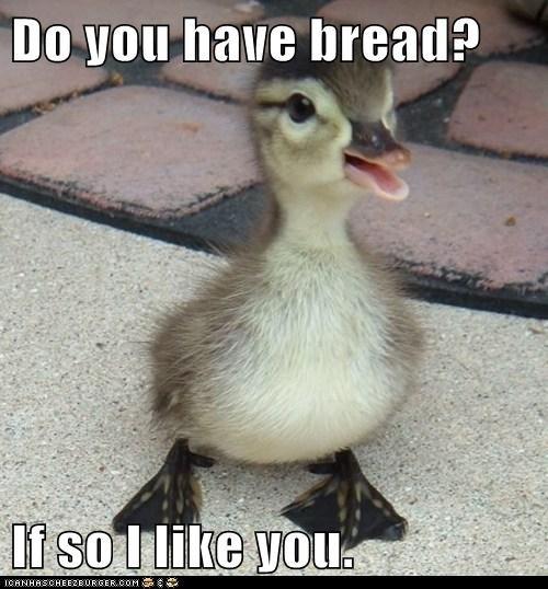 duck bread - 7170227968