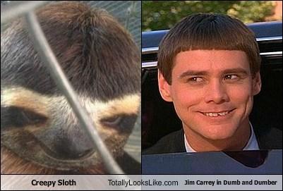 Dumb and Dumber totally looks like sloths jim carrey - 7170285824