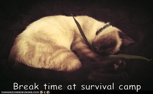 Break time at survival camp