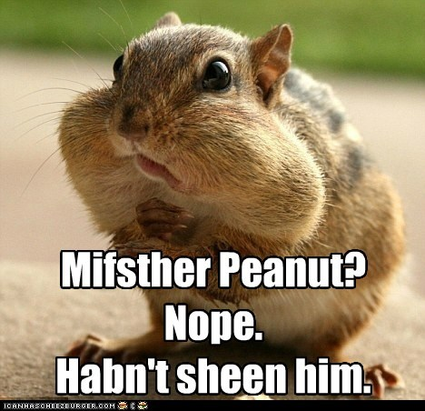 squirrel,peanut