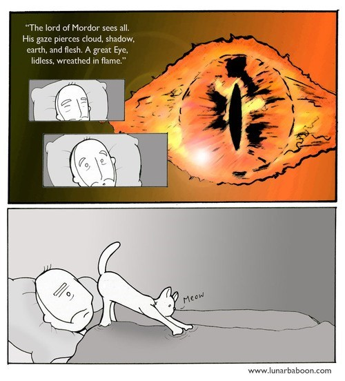 Lord of the Rings Cats web comics