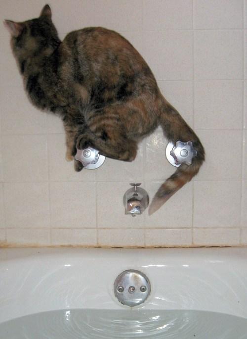 bath,Cats