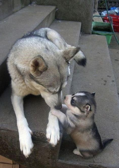 puppy play mom - 7170846976