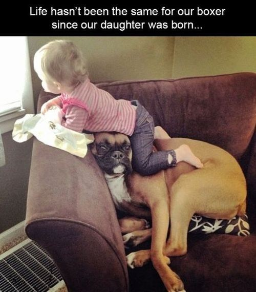 kids boxer dogs