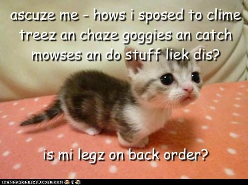 Cheezburger Image 7171033344