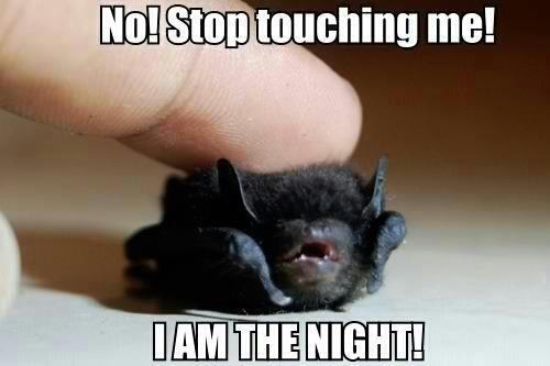 I AM THE NIGHT bat - 7171831296