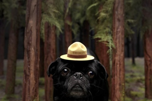 Smokey the Bear,hat