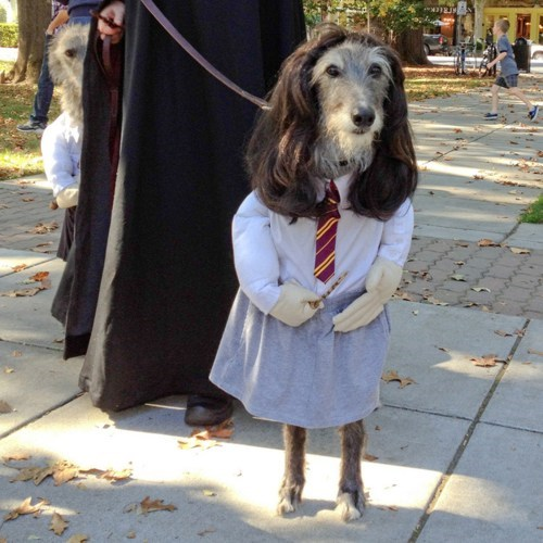 costume Harry Potter - 7173041152