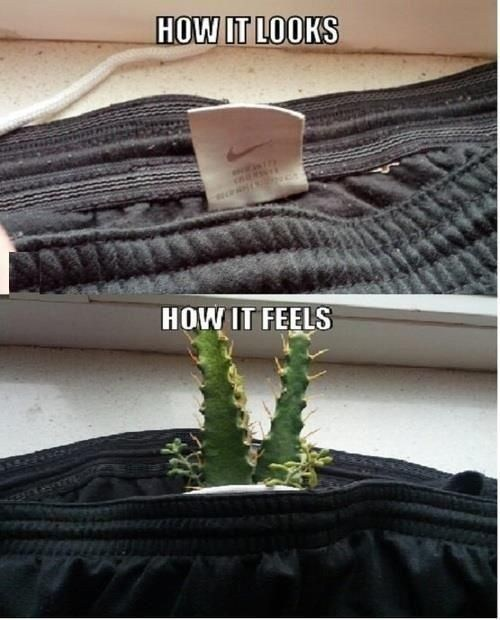 tags,cactus,clothes
