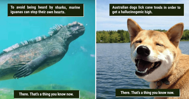 Funny animal facts.