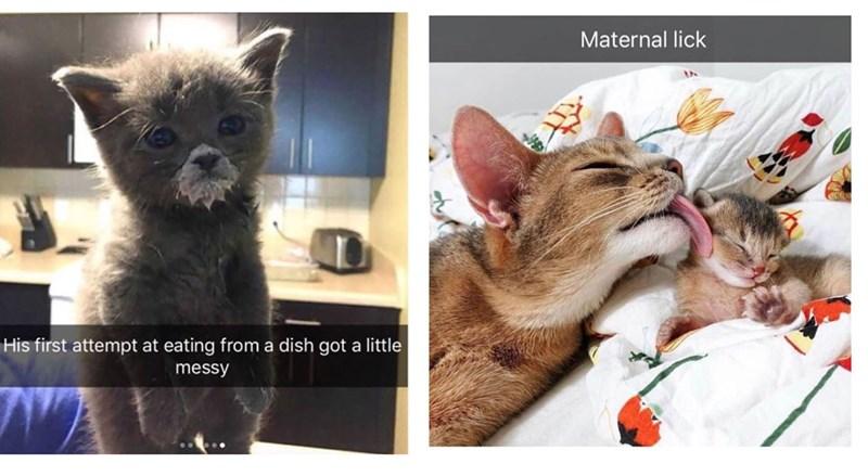 snapchat, cute animals