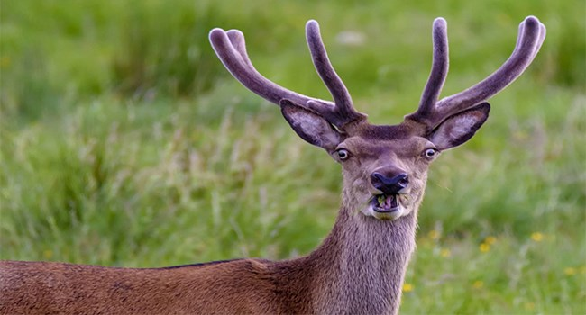 nature photography comedy amazing silly animals - 7175429