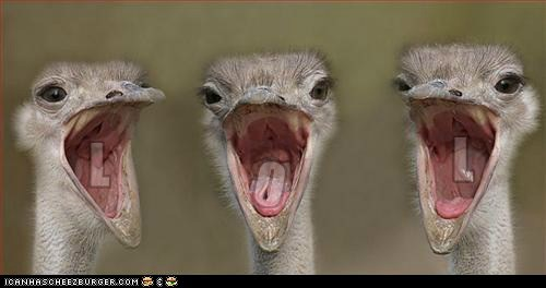 ostriches lol - 7176069120