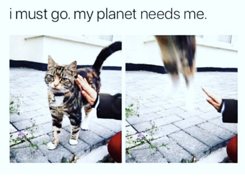 to go go animal memes animals planet - 7176453