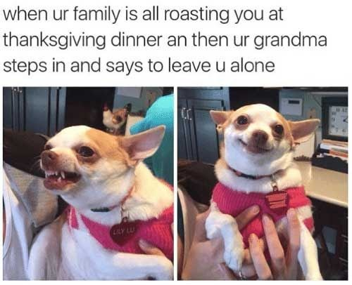 thanksgiving memes, funny animals