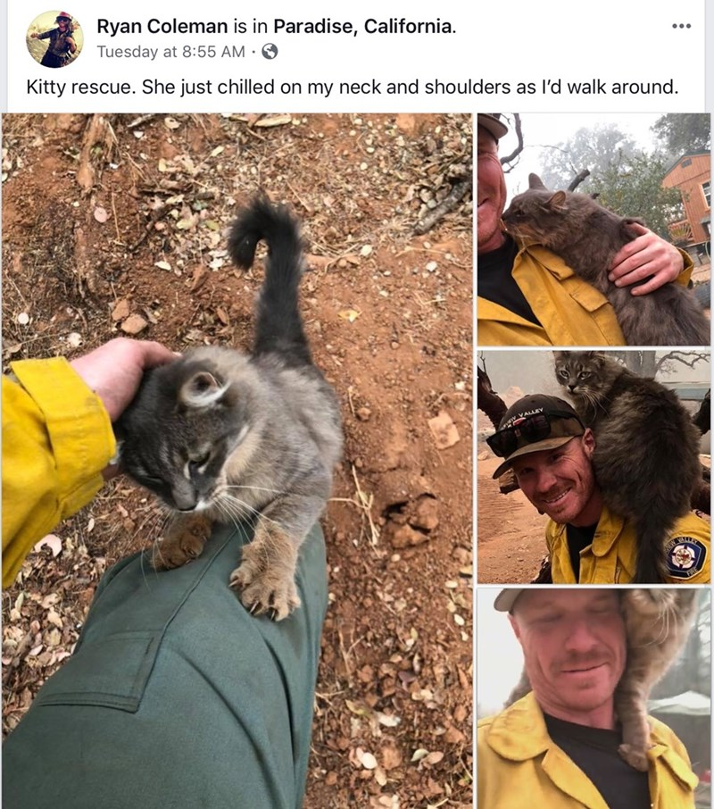 campfire heroes firefighters donate fire Cats animals rescue - 7177989
