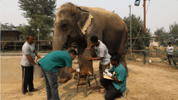 hospital elephants india wildlife - 7179013