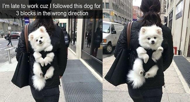 aww so cute cuteness animals cuteness overload - 7179525