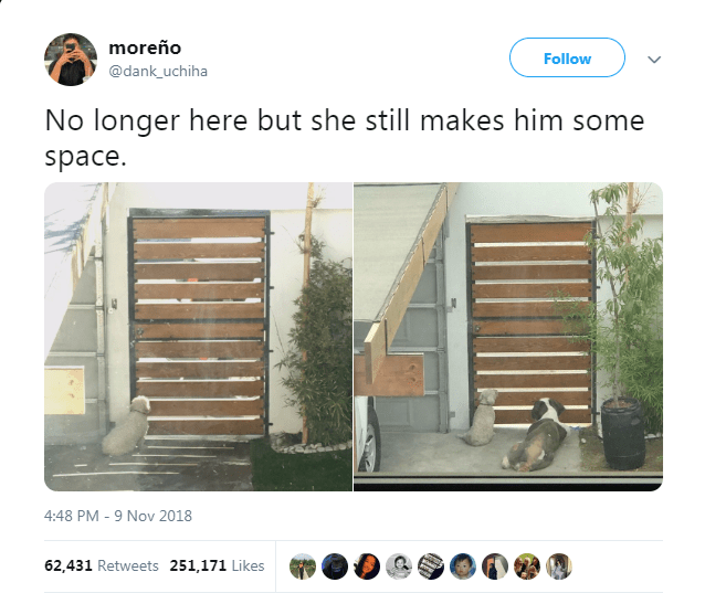 wholesome dog remembers her friend after he passed away