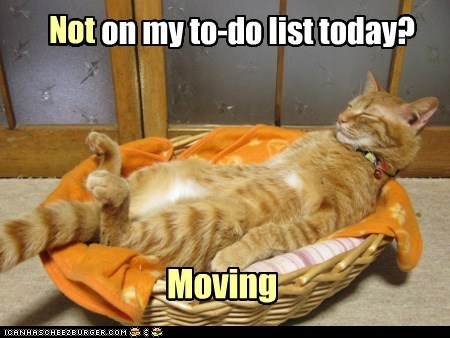 lazy to-do list Cats - 7181221376