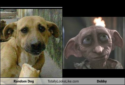 dogs totally looks like Dobby