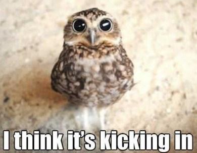 drugs Owl kicking in - 7184201728