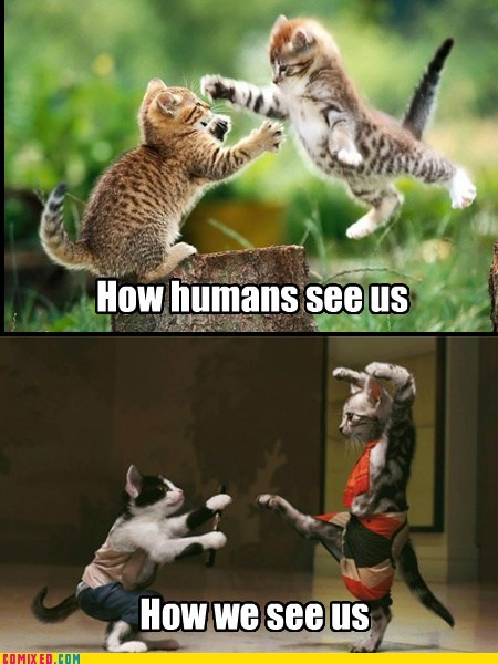 puns kung fu Cats perspective - 7185478656