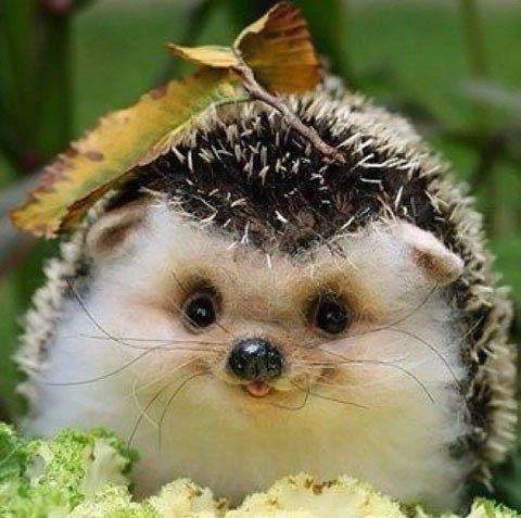 derpy hedgehog - 7185517824