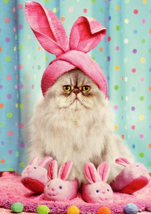 easter bunny Cats - 7185576192