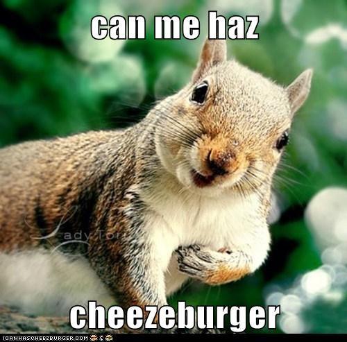 Cheezburger Image 7185827584