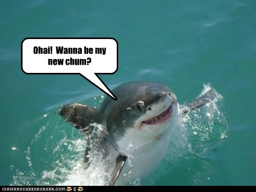 shark,friendly,chum