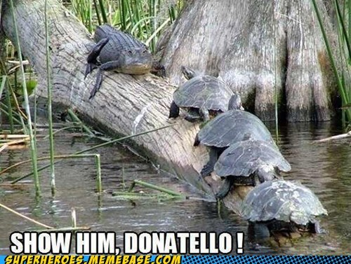 alligator,TMNT,turtles