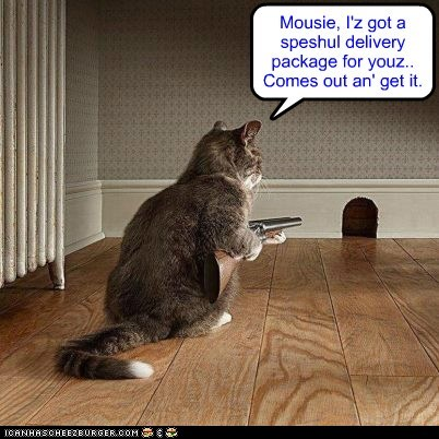 Mousie, I'z got a speshul delivery package for youz.. Comes out an' get it.