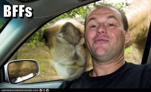 camel,BFFs