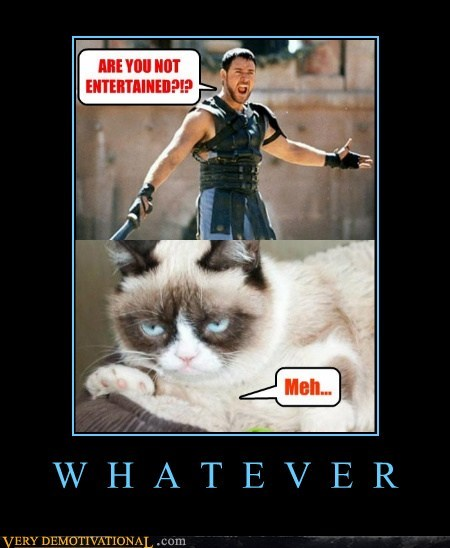 entertained grumpy cats whatever - 7193206528