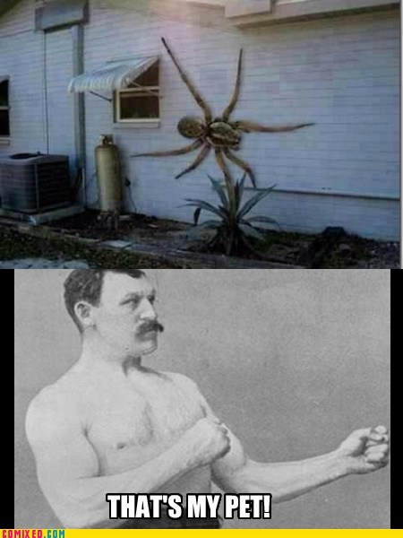 pets,giant spiders,overly manly man