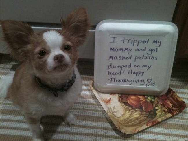 dogs thankgiving dog shaming ruining dinner - 7195909