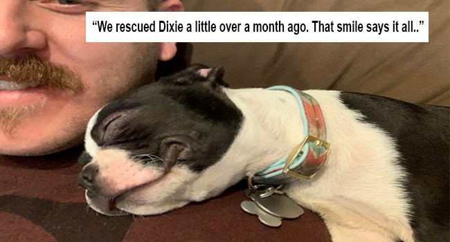 heartwarming wholesome pet pictures