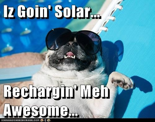 pug solar power sun - 7197526272